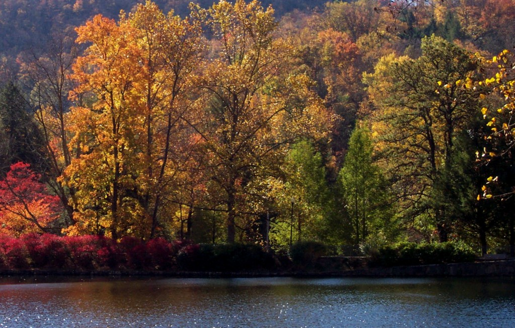 Fall leave across the pond
